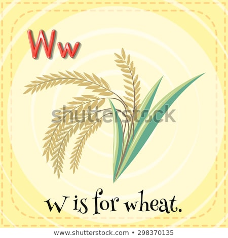 Flashcard letter W is for wheat Stock photo © bluering