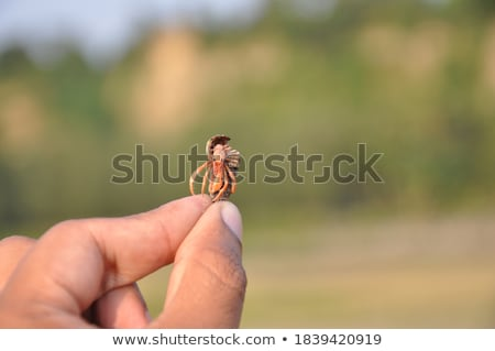 Caranguejo concha ilustração praia água natureza Foto stock © adrenalina