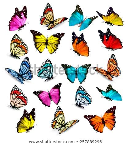 coleção · borboletas · isolado · branco · azul - foto stock © rufous