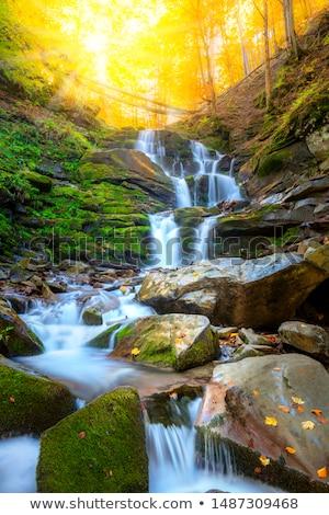 Cascade scène forêt illustration arbre paysage Photo stock © bluering