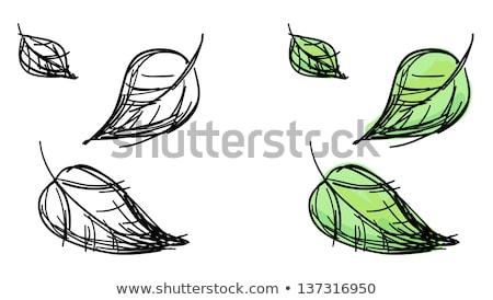 Abstract Round Falling Leaves Green Autumn Tree Vector Art Illustration Design Stock photo © svvell