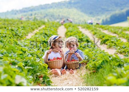 Portrait of little siblings on a farm Stock photo © konradbak