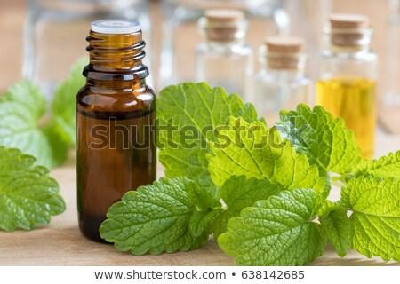 A bottle of melissa essential oil with fresh melissa Stock photo © madeleine_steinbach