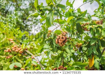 still life of rose apple or chompu growing on a tree stock photo © galitskaya