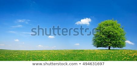 Prado completo dandelion cênico quadro leão Foto stock © fanfo