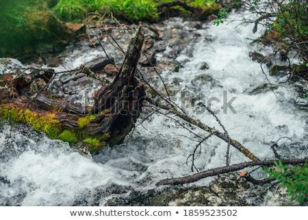 Moss on logs in a mountain stream Stock photo © wildnerdpix