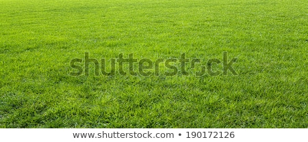 grass field mowed Stock photo © PixelsAway