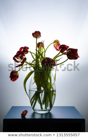 Withered tulip flower Stock photo © ajt