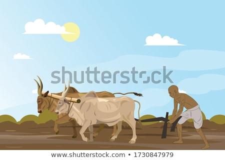 Mező mezőgazdaság vetés tavasz textúra természet Stock fotó © franky242