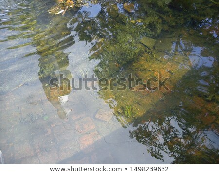 Stock photo: Old fountain covered with algae