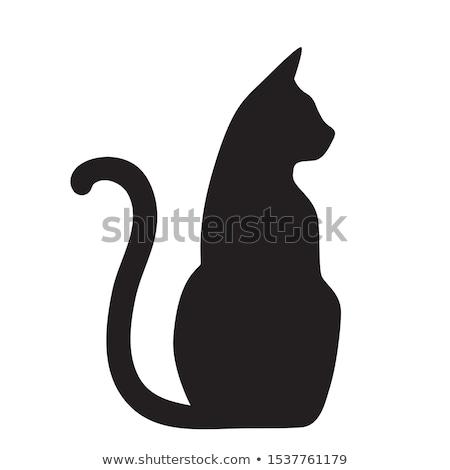 Сток-фото: кошки · силуэта · иллюстрация · изолированный · белый · сидят