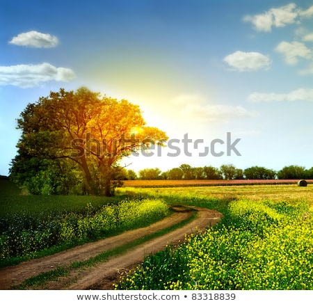 Estrada rural colorido verão paisagem flores Foto stock © olandsfokus