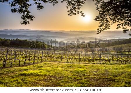 panorâmico · ver · toscana · paisagem - foto stock © boggy