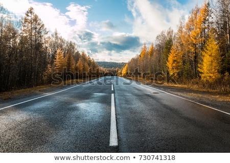 asphalt road in autumn day stock photo © ssuaphoto