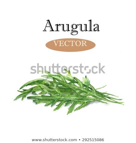 Stock photo: Watercolor illustrations of arugula