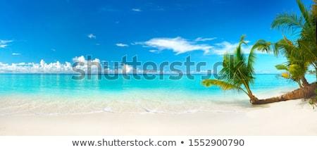palmboom · blauwe · hemel · witte · wolken · vakantie · natuur - stockfoto © simply