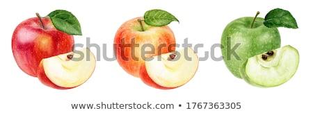Vízfesték szett piros almák illusztráció egész Stock fotó © Sonya_illustrations