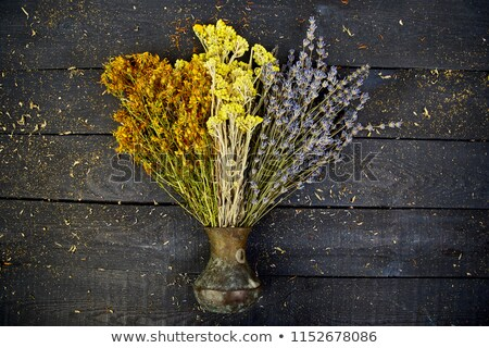 Dry herbs flower in vase - tutsan, sagebrush Stock photo © Illia