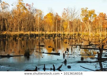 森林 シーン 森 切り 実例 自然 ストックフォト © colematt
