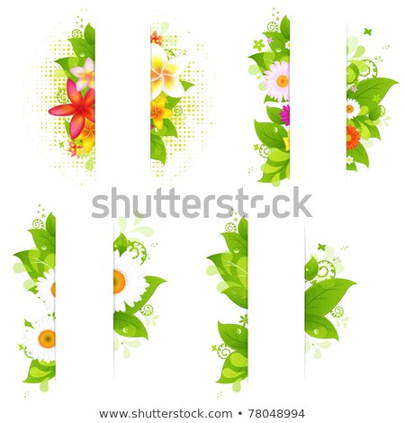 pattern of plumeria and gerbera flowers and leaves on white bac stock photo © margolana