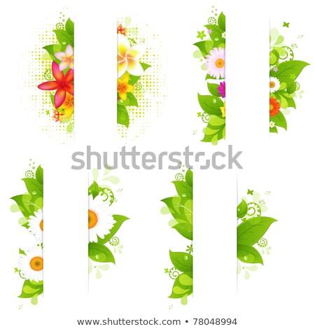Model çiçekler yaprakları beyaz vektör Stok fotoğraf © Margolana