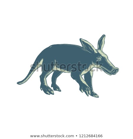 Aardvark Scratchboard Style Stock photo © patrimonio