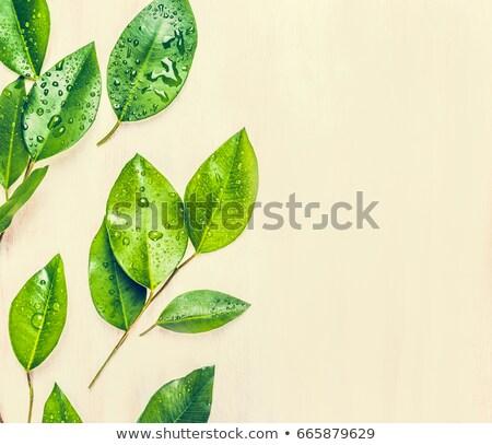 Friss petrezselyem levelek fából készült felső kilátás Stock fotó © masay256