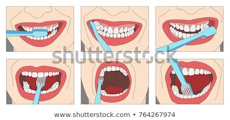 Közelkép nő fogkefe takarítás fogak orális Stock fotó © dolgachov