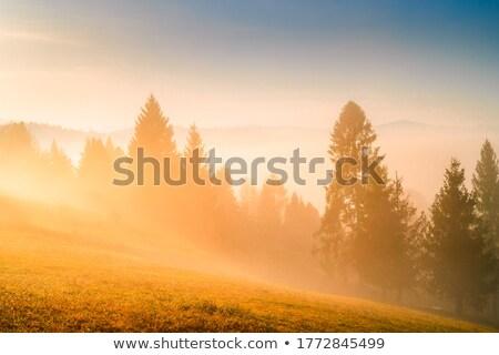 霧の ショット 水 自然 岩 ストックフォト © craig