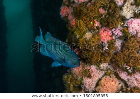 鍛冶屋 · 学校 · 水 · 魚 · 海 - ストックフォト © Laracca