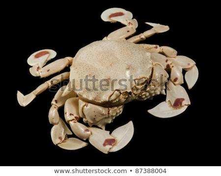 frontal shot of a moon crab Stock photo © prill