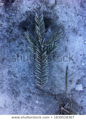 kar · yüzey · yapı · doğa · arka · plan · duvar · kağıdı - stok fotoğraf © morrbyte