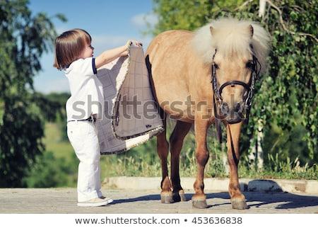westerse · zadel · leggen · prairie · paarden · gras - stockfoto © taiga