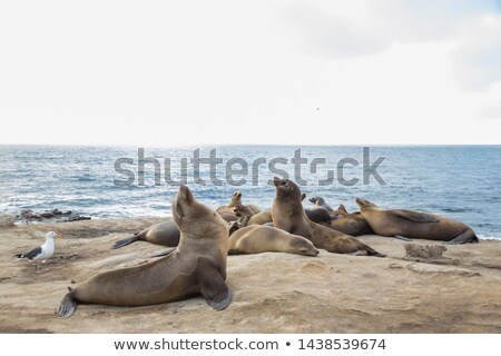 Sea lion on the beach Stock photo © Hofmeester