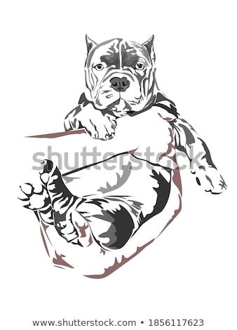 犬 · 手 · 9 · 古い · 英語 - ストックフォト © willeecole