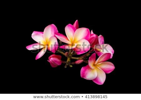Bos ontwerp tuin schoonheid zomer plant Stockfoto © bdspn