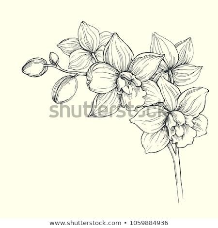 эскиз орхидеи вектора Vintage прибыль на акцию 10 Сток-фото © kali