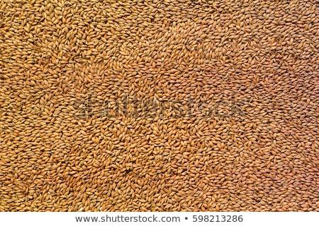 Stock photo: malt as background