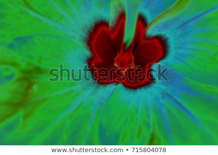 Ibiscus flower detail  Stock photo © AlessandroZocc