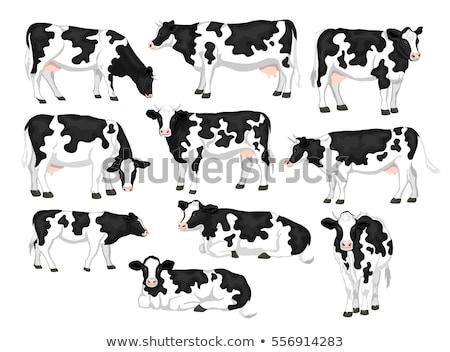 Holstein Cow Lying in Grass Stock photo © rhamm