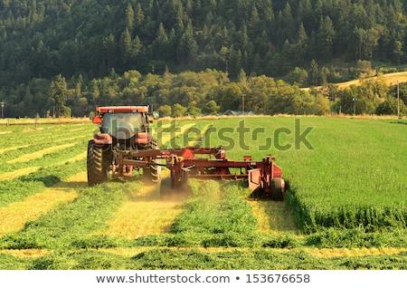 Traktor gereblye mező széna fák gép Stock fotó © Digifoodstock