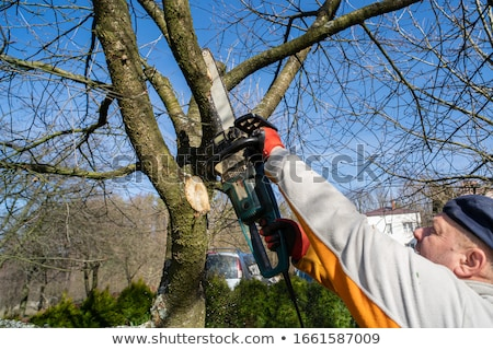 Gardener pruning and cutting the trees Stock photo © Ustofre9