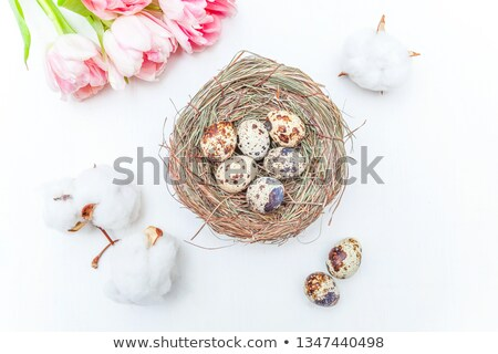 Stock foto: Tulip And Birds Nest With Egg