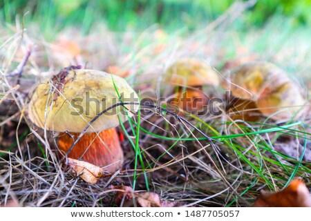 üç küçük yosun büyümek yeşil orman Stok fotoğraf © romvo