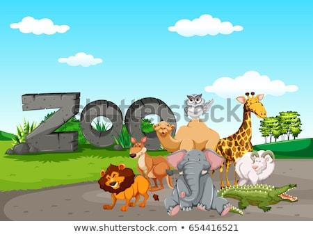 Hayvanat bahçesi örnek sanat kuş aslan Stok fotoğraf © bluering