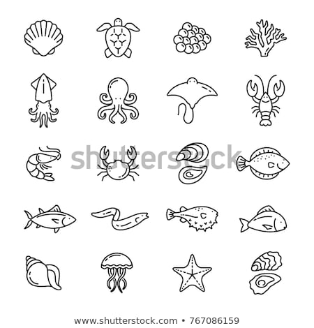 eel and octopus marine set vector illustration stock photo © robuart