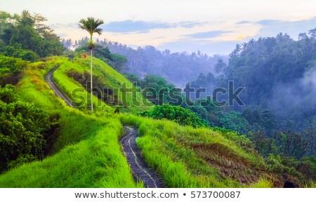 Caminata escénico verde valle bali cielo Foto stock © galitskaya