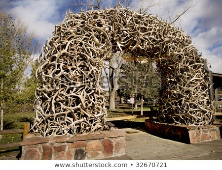 Stack of Antlers from the Elk reserve Stock photo © photoblueice