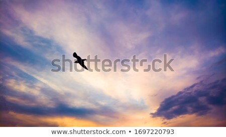 Seagull Soaring Sunset Stock photo © dgilder
