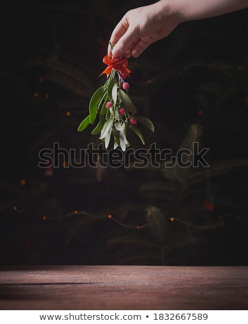 Mistletoe Stock photo © rbiedermann